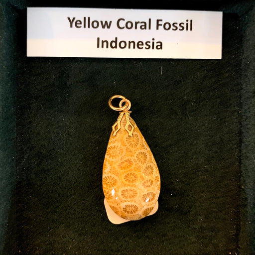 Pendant: Yellow Coral Fossil