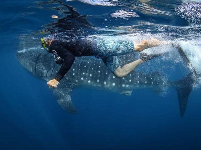 Swimming with Whale Sharks in Isla Mujeres, Mexico with PangeaSeed Foundation