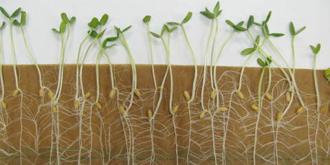 The forest nursery: collection of tree seeds and propagation of seedlings