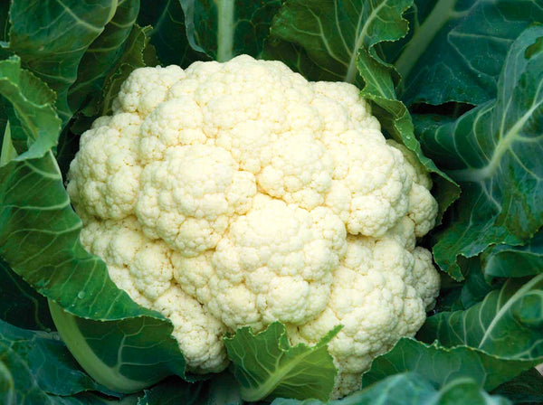 Amazing cauliflower image####