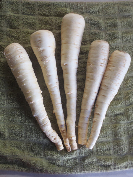 Andover parsnip image####