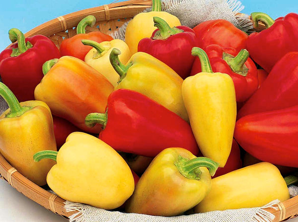 Antohi Romanian pepper, sweet image####