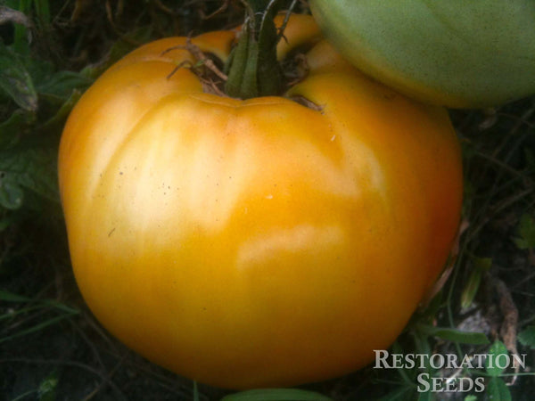 Arkansas Marvel tomato image####