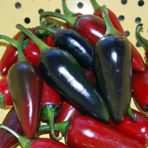 Black Hungarian pepper, sweet image####