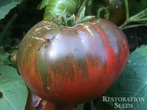 Black Sea Man tomato image####