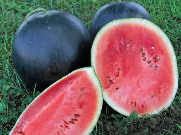 Blacktail Mountain watermelon image####