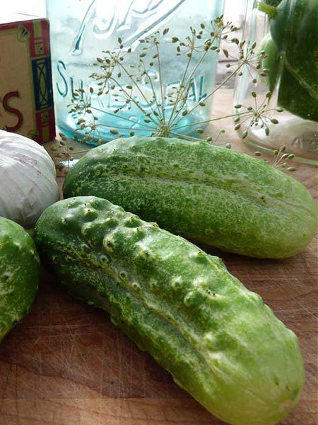 Boston Pickling cucumber image####