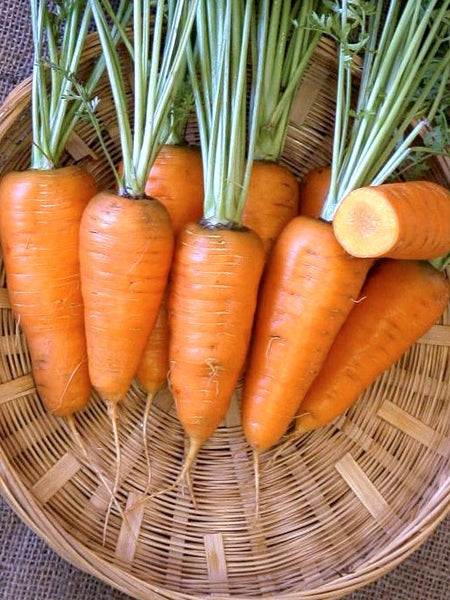 Chantenay Red Cored carrot image####