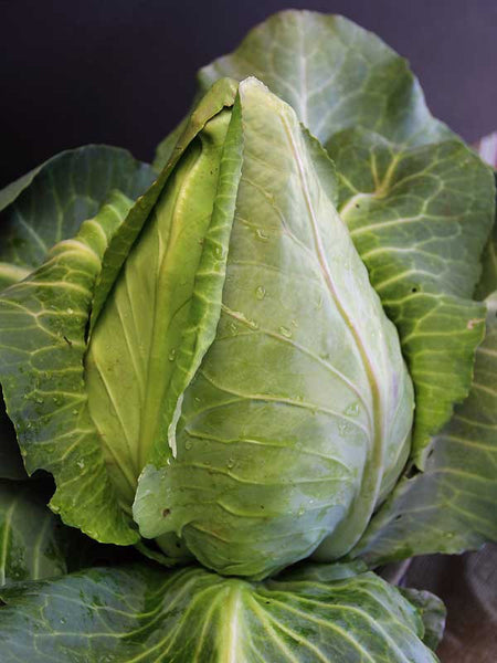 Charleston Wakefield cabbage image####