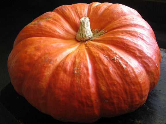 Cinderella Pumpkin winter squash maxima image##Wenderly: Perfecting the Art of Living in Suburbia##http://wenderly.com/2010/10/01/the-great-pumpkin/