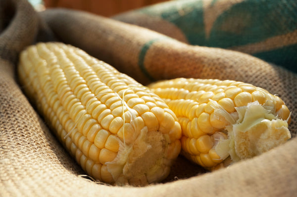 Super Sweet Early corn, sweet image##Photo: Charlie Burr##https://www.flickr.com/photos/128745158@N06/
