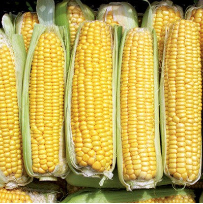 Super Sweet Early corn, sweet image####