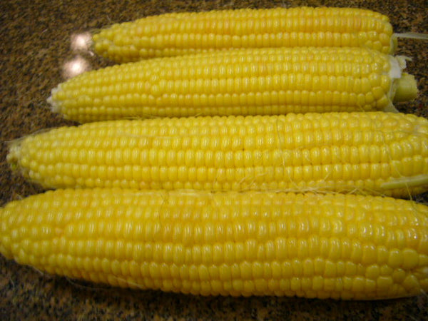 Golden Bantam corn, sweet image####