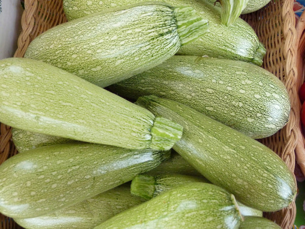 Grey zucchini image##Blue House Greenhouse Farm##http://bluehousegreenhousefarm.blogspot.com/2011/09/farm-stand-photo-essay.html