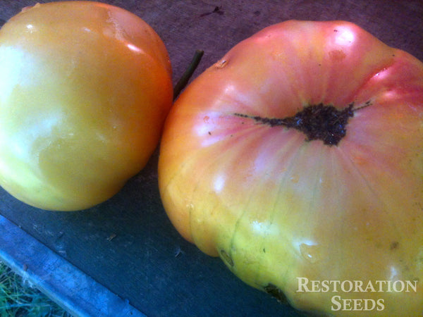 Hawaiian Pineapple tomato image####