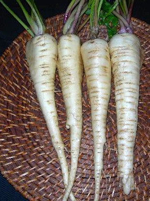 Hollow Crown parsnip image####