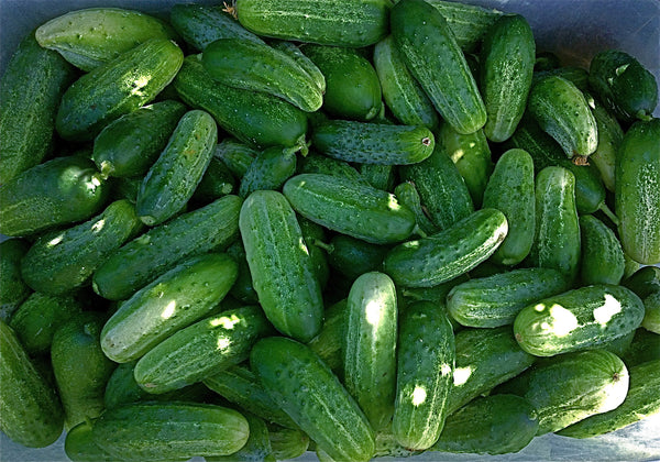 Homemade Pickles cucumber image####