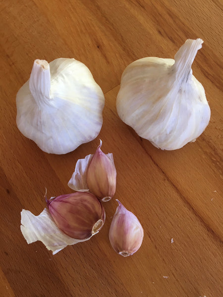 Garlic, Inchelium Red SOLD OUT