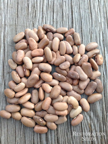 Kentucky Wonder, brown seeded bean image####