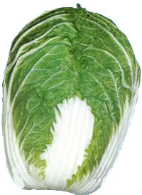 Chinese Cabbage Brassica Rapa Chinensis