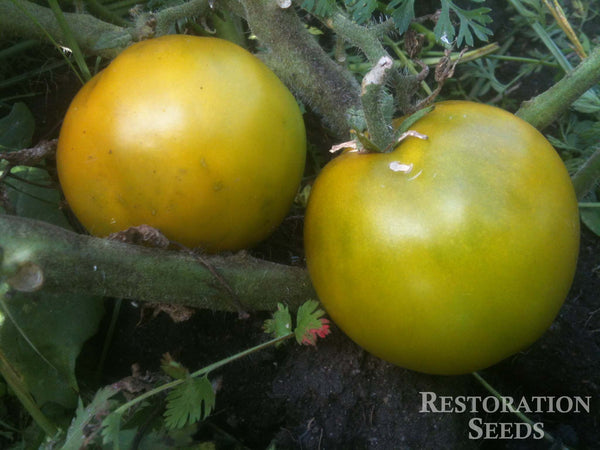 Lime Green Salad tomato image####
