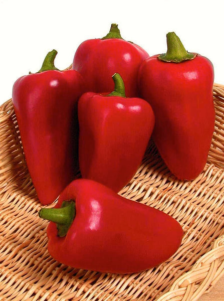 Lipstick pepper, sweet image####