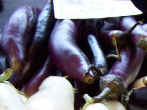 Long Purple eggplant image####