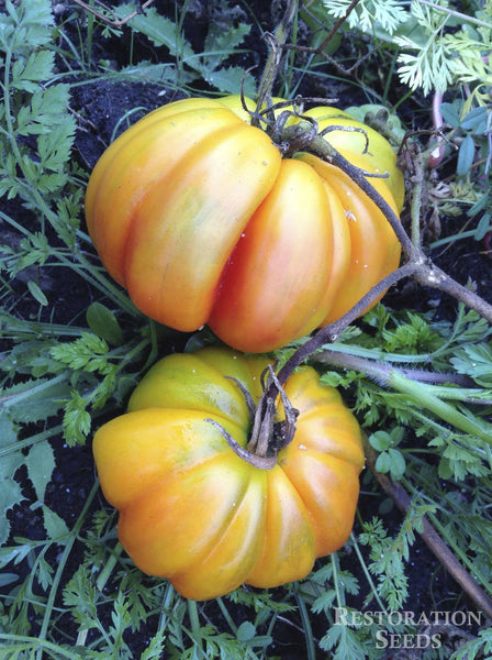 Marvel Striped tomato image####