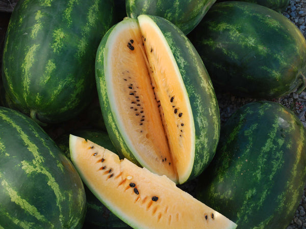 Mountain Sweet Yellow watermelon image####