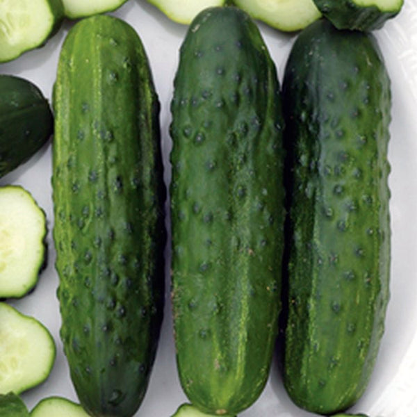 National Pickling cucumber image####