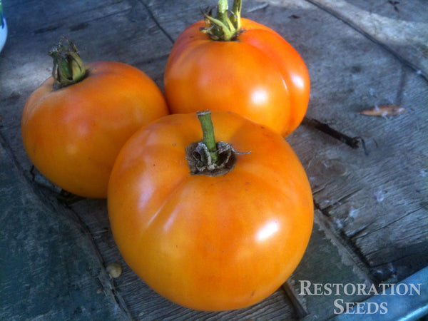 Nebraska Wedding tomato image####