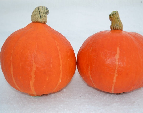 Orange Kuri winter squash maxima image####