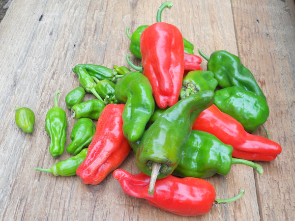 Padrón pepper, sweet image####