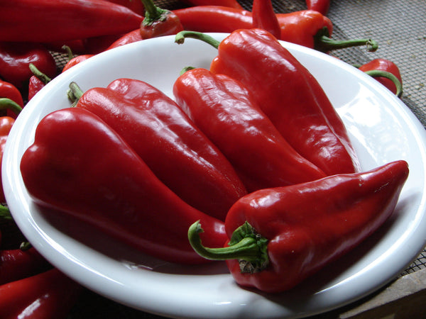 Stocky Red Roaster pepper, sweet image####