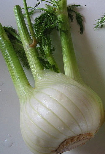 Perfection fennel image####