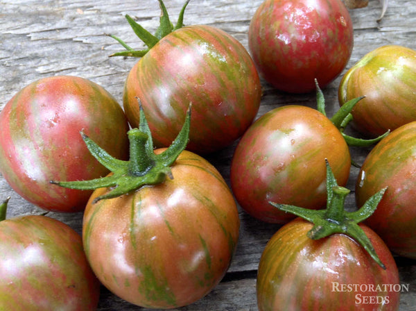 Purple Bumble Bee tomato image####