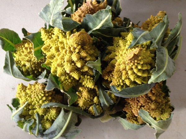 Romanesco cauliflower image##Photo: Margaret Noon##
