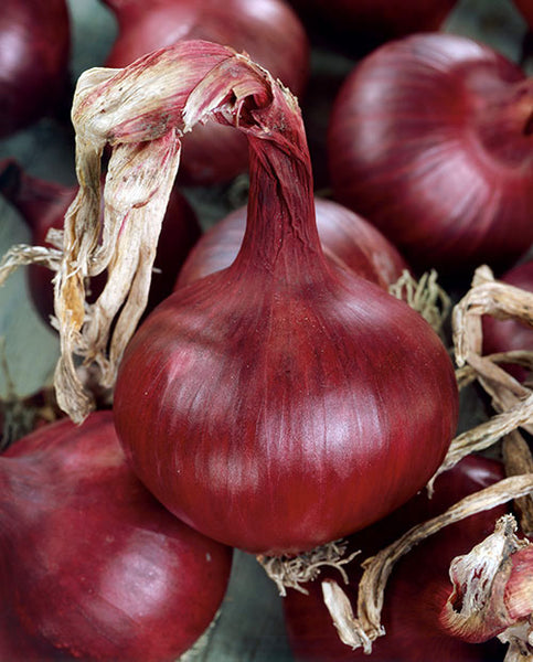 Red Grano onion image####