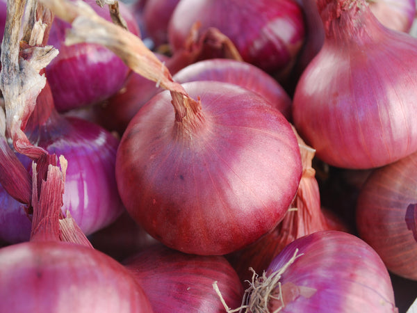 Red Wethersfield onion image####