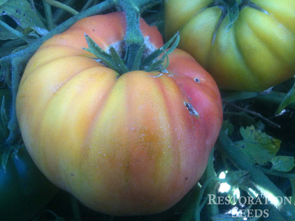Reif Red Heart tomato image####