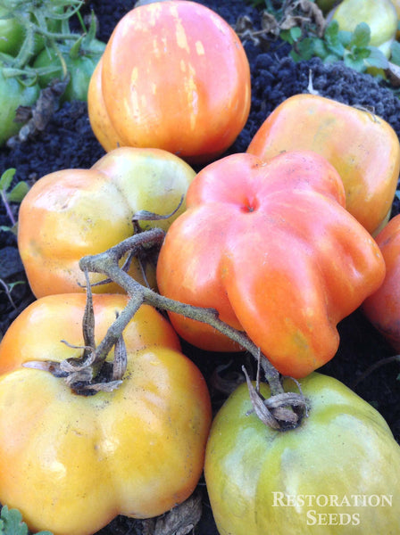 Schimmeig Striped Hollow tomato image####
