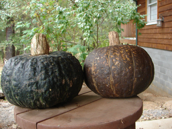 Black Forest Kabocha winter squash maxima image####