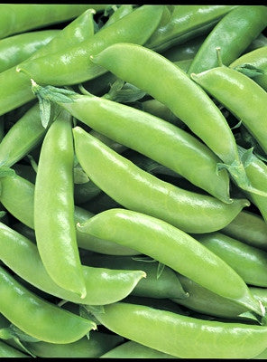 Super Sugar Snap pea image####