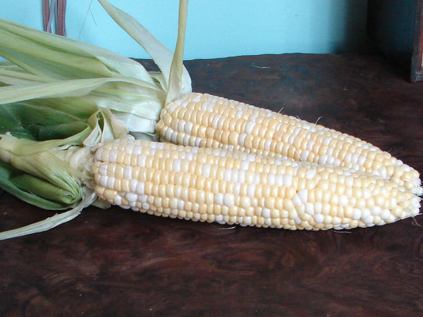 Sweet Bi and Bye corn, sweet image####