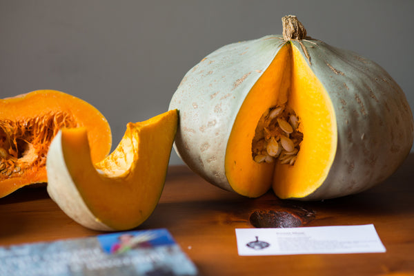 Sweet Meat winter squash maxima image##Photo: Shawn Linehan Photography.##https://www.flickr.com/photos/128745158@N06/