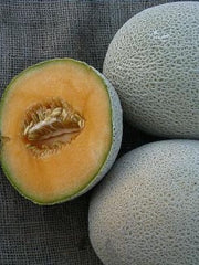 Huerfano Bliss Melon Organic Restoration Seeds