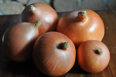 Valencia onion image##Hobbs Family Farm##