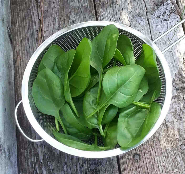 Viroflay spinach image##Homegrown - Adventures in my Garden##http://homegrown-adventuresinmygarden.blogspot.com/2014_05_01_archive.html