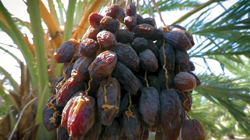 Where Do Dates Come From?