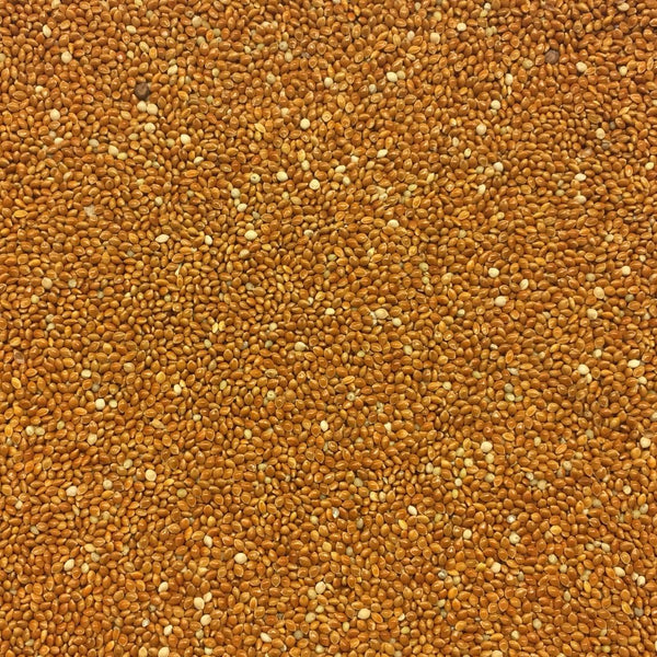 RED PROSO MILLET SEED